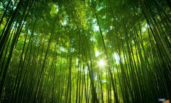 Ormanlar Teması Ekran Görüntüleri - 1