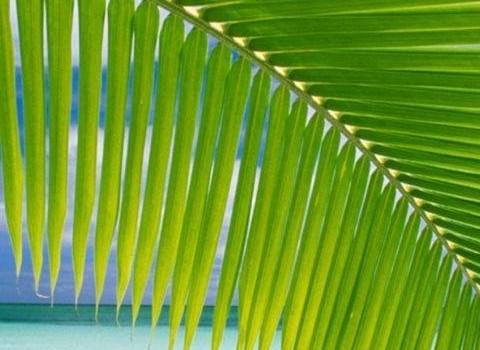 Tropical Paradise Wallpapers Ekran Görüntüleri - 4