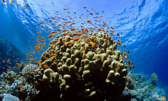 Tropikal Balık Teması Ekran Görüntüleri - 2