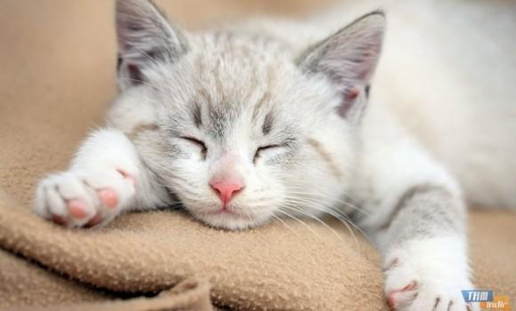 Uykulu Kedi Yavruları Teması Ekran Görüntüleri - 3