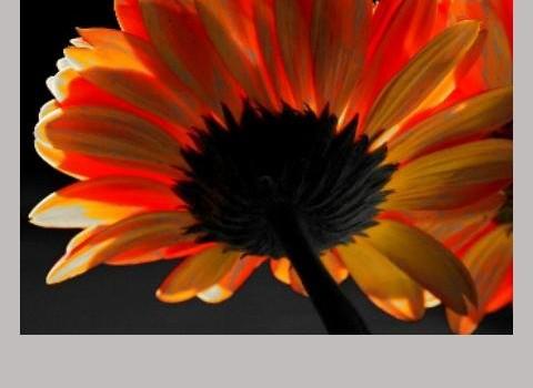 Wallpaper Effects Ekran Görüntüleri - 2