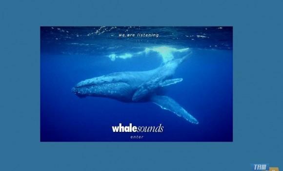 Whale Sounds Ekran Görüntüleri - 2