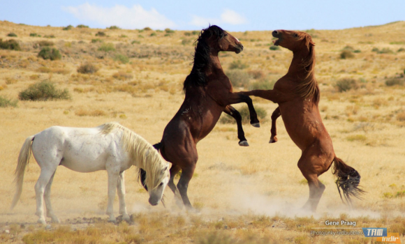 Yabani Atlar Teması Ekran Görüntüleri - 1