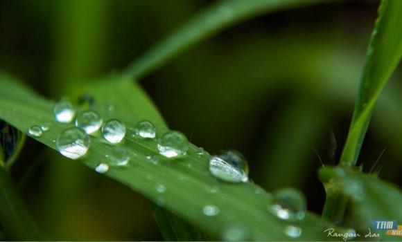 Yağmur Damlaları Teması Ekran Görüntüleri - 2