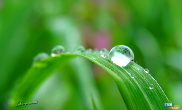 Yağmur Damlaları ve Çiy Teması Ekran Görüntüleri - 1