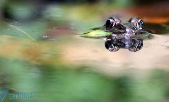 Yakın Çekim Canlılar Teması Ekran Görüntüleri - 2