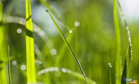Yeşil Dünya Teması Ekran Görüntüleri - 1