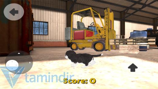 Dog Simulator Ekran Görüntüleri - 2