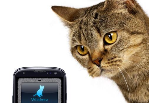 Human-to-Cat Translator Ekran Görüntüleri - 3