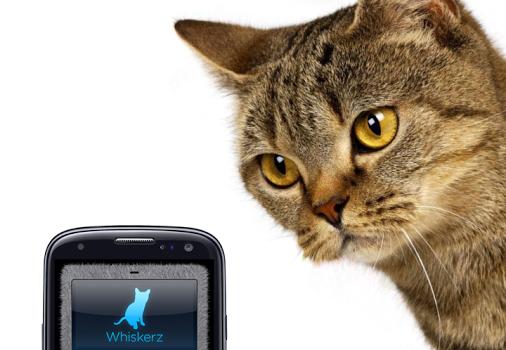 Human-to-Cat Translator Ekran Görüntüleri - 4