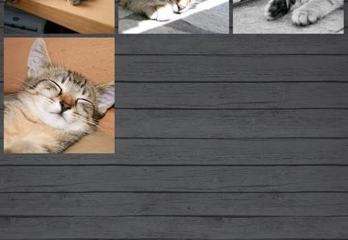 Pet Manager Lite Ekran Görüntüleri - 1