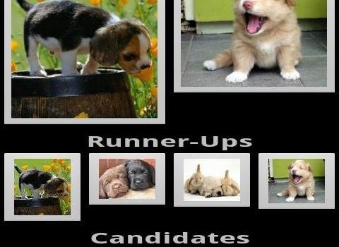 Rate My Pets Ekran Görüntüleri - 3