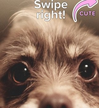 Cute Or Not Ekran Görüntüleri - 3