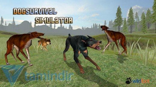 Dog Survival Simulator Ekran Görüntüleri - 5
