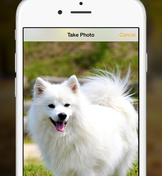 Dog Walk Ekran Görüntüleri - 3