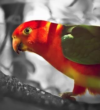 Phoenix Pro Photo Editor Ekran Görüntüleri - 1