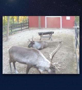 ReindeerCam Ekran Görüntüleri - 3