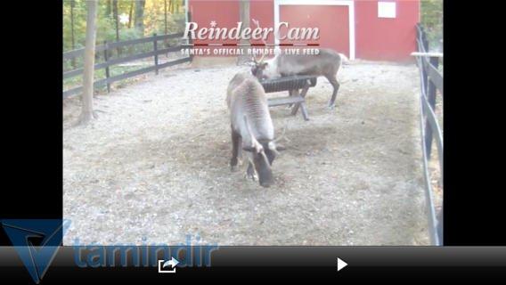 ReindeerCam Ekran Görüntüleri - 1