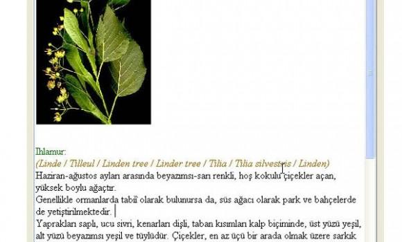 Epiri Editör Ekran Görüntüleri - 2