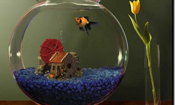 Goldfish Aquarium Ekran Görüntüleri - 1