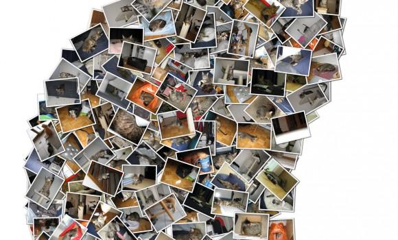 Shape Collage Ekran Görüntüleri - 1