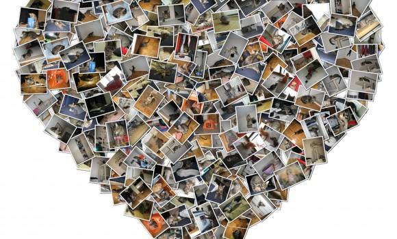 Shape Collage Ekran Görüntüleri - 2