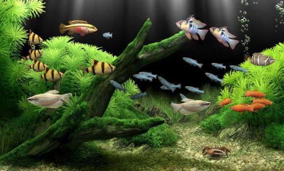 Dream Aquarium Ekran Görüntüleri - 2