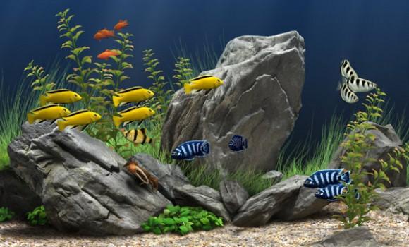 Dream Aquarium Ekran Görüntüleri - 1