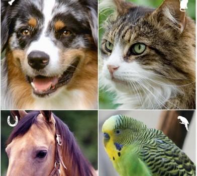 APCC by ASPCA Ekran Görüntüleri - 4