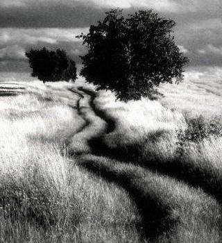 Dramatic Black & White Ekran Görüntüleri - 1