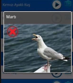 Kuş Sesleri Ekran Görüntüleri - 3