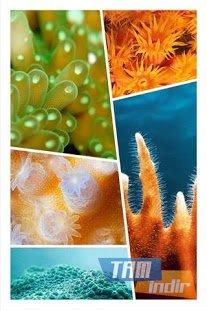 Photo Collage Ekran Görüntüleri - 3