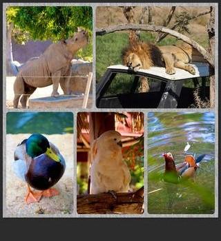 PicPlayPost Ekran Görüntüleri - 3