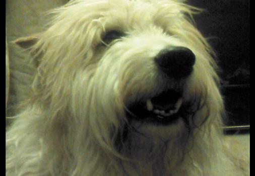 Selfie Camera App Ekran Görüntüleri - 1
