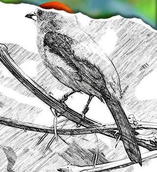 Sketch Guru Ekran Görüntüleri - 4