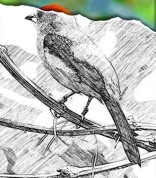 Sketch Guru Ekran Görüntüleri - 5