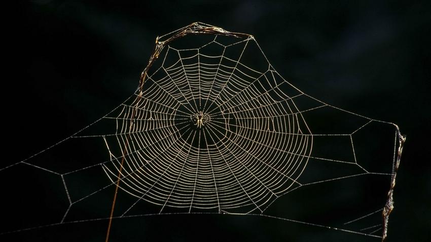 Bilim İnsanları, Örümcek İpeğinden Hassas İşitme Cihazı Yaptı