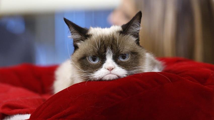 Grumpy Cat kazanç