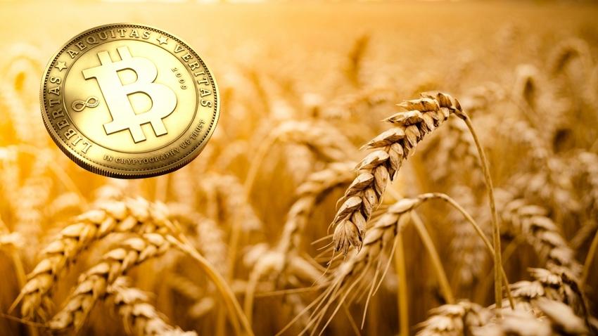Türkiye, Rusya'dan Aldığı Buğdayın Ödemesini Bitcoin ile Yaptı!