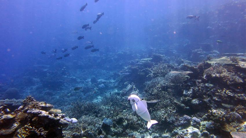 MIT Araştırmacıları 'Robot Balık' Geliştirdi