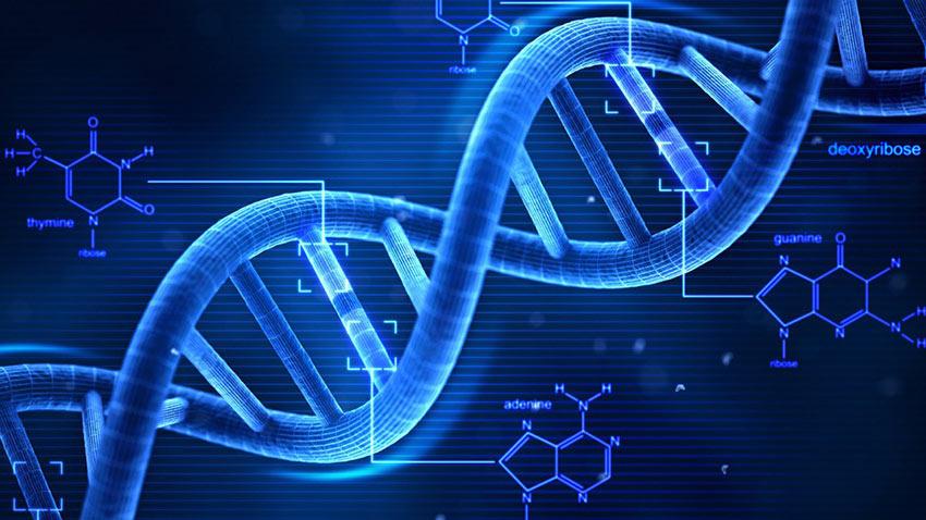 DNA Haritası