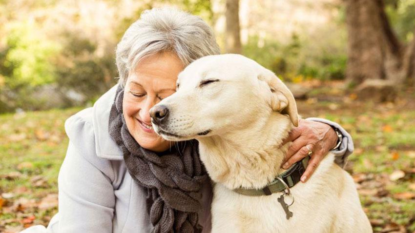 Köpekler Sahipleriyle Empati Kurabiliyor