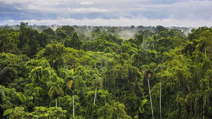 Amazon Ormanları Karbon Emilimi Kuraklık