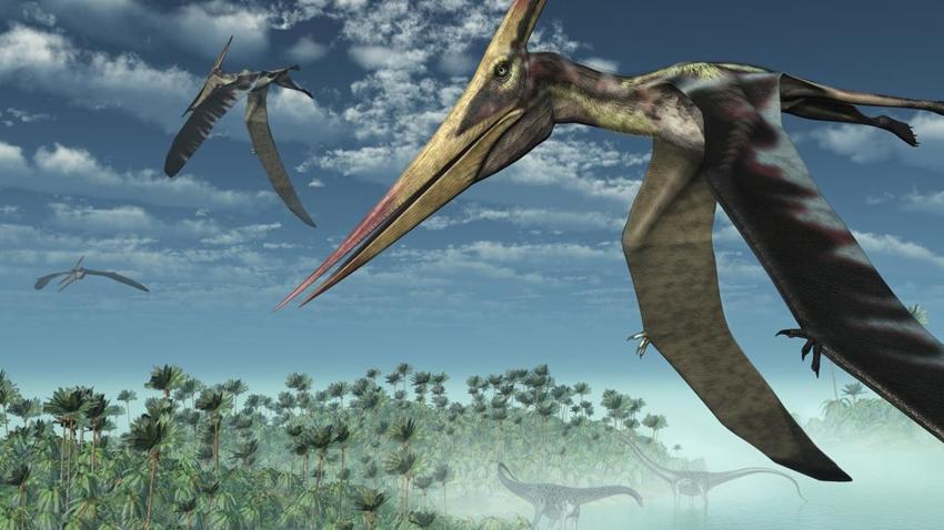 dinozor keşfi Pterosaur