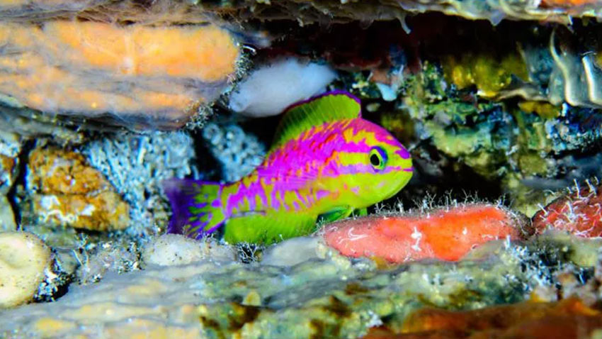 Bilim İnsanları Yeni Balık Türü