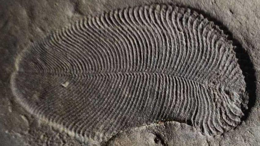 Bilinen İlk Hayvana Ait Fosil Bulundu