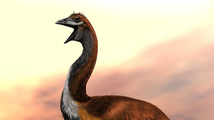 Dünyanın En Büyük Kuş Türü ile Tanışın Vorombe Titan