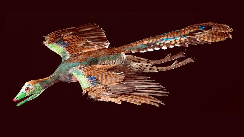 İlk kuş 1