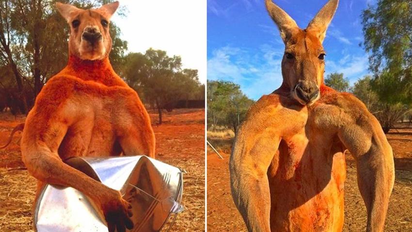 Sosyal Medya Fenomeni Kanguru Roger Hayatını Kaybetti