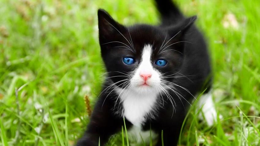 kedi illüzyon